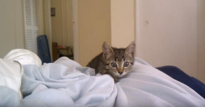 Kitten Attack
