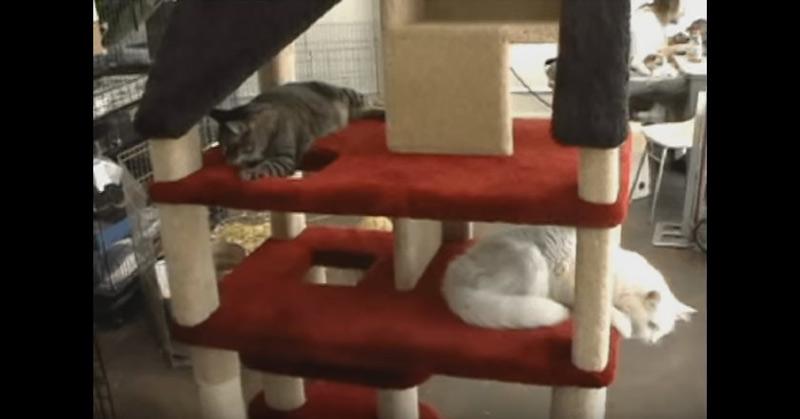 Video - DollHouse Cat Condo
