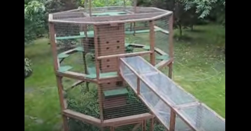 Video - Incredible Cat House