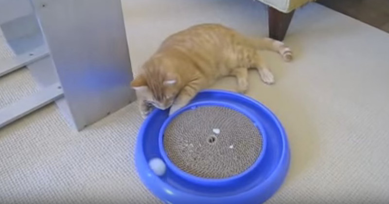 Video - World's Best Cat Toy