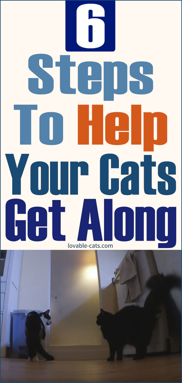 6 Steps to Help Your Cats Get Along