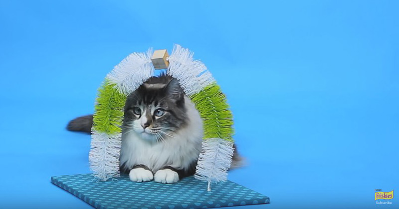 DIY Cat Toys - How To Make A Self-Petting Station