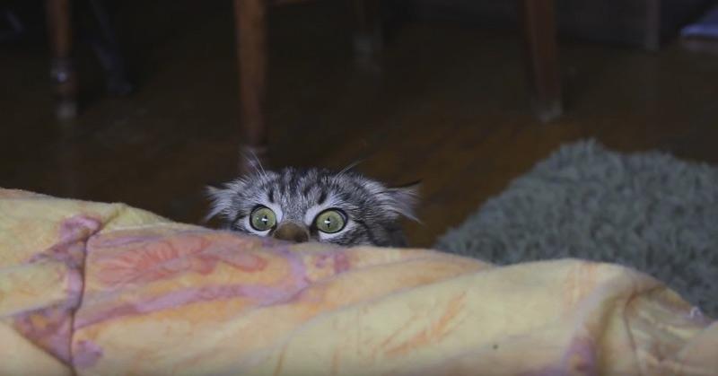 Funny Cat Again