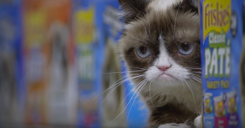 Happiness Finds Grumpy Cat