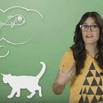 How And Why Do Cats Purr