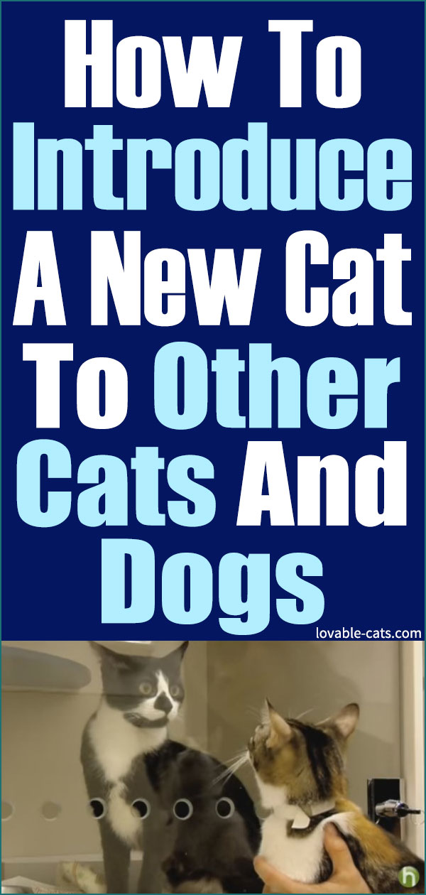 How To Introduce A New Cat To Other Cats And Dogs