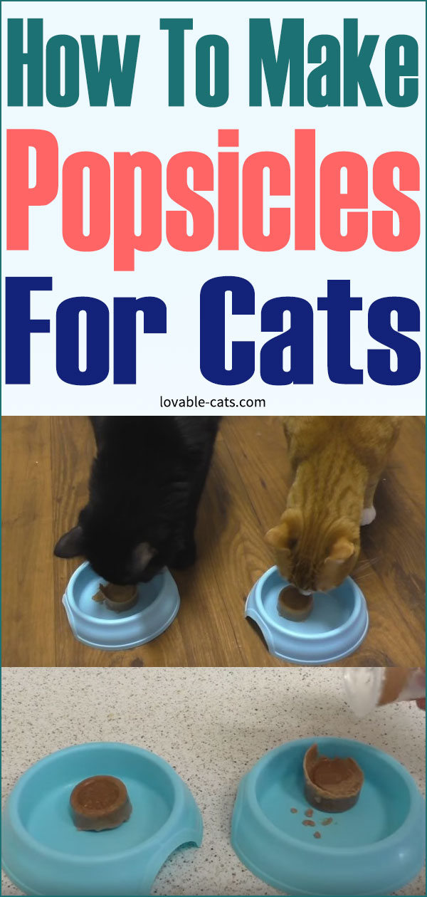 How To Make Popsicles For Cats