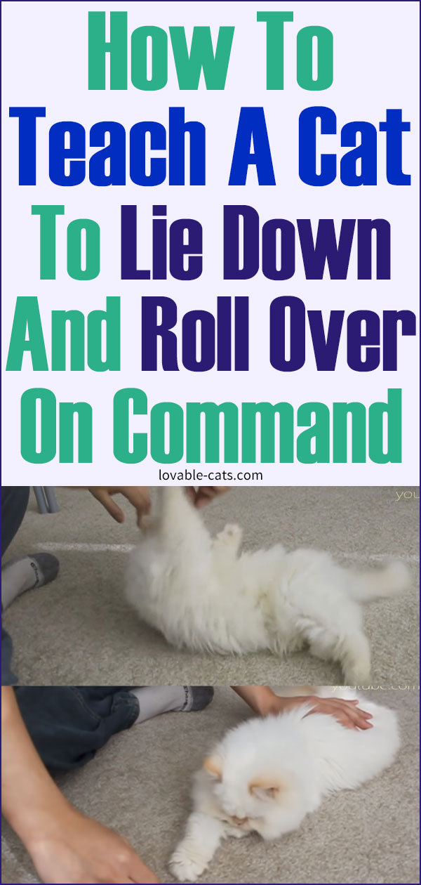 How To Teach A Cat To Lie Down And Roll Over On Command