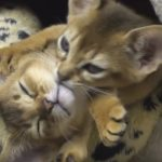 Kittens Hugging – Epic Cuteness
