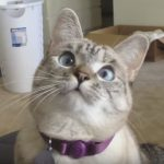 This Adorable Cat Has 3 Million Followers On Instagram