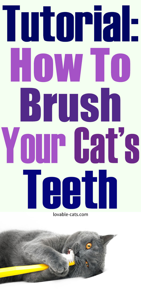 Tutorial - How To Brush Your Cat's Teeth