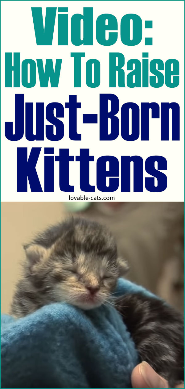 Video - How To Raise Just-Born Kittens