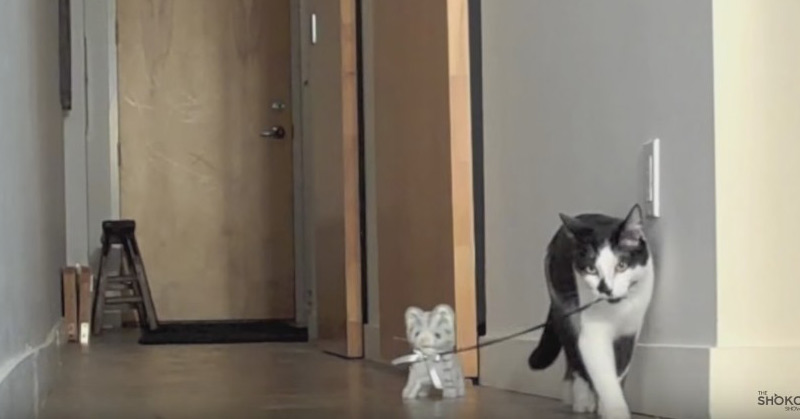Walking The Kitten