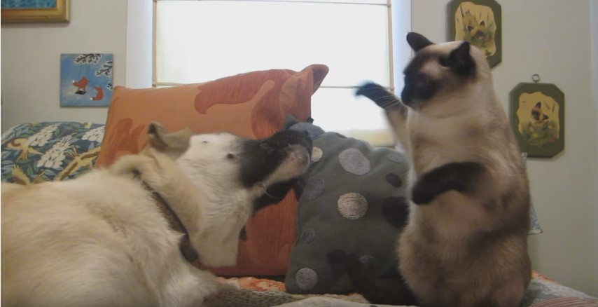 Cat boxing dog. Who wins