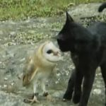 Cat And Owl Playing – Fum & Gebra – Perfect Friendship