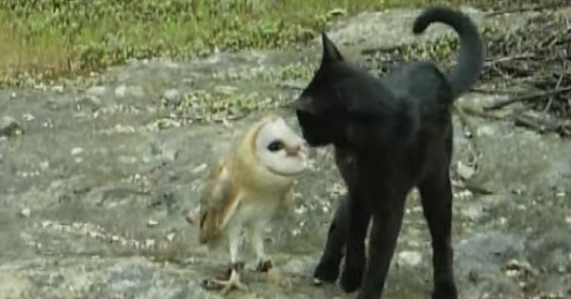 Cat And Owl Playing - Fum & Gebra - Perfect Friendship (1)