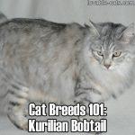 Cat Breeds 101: Kurilian Bobtail