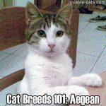 Cat Breeds 101: Aegean