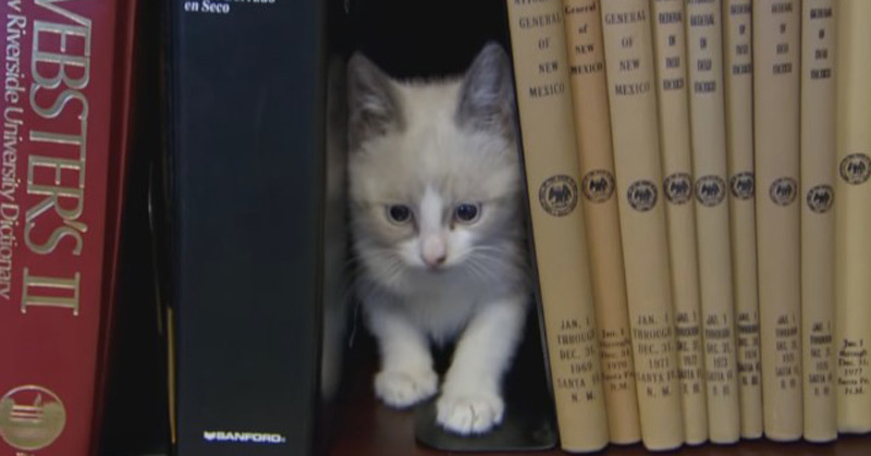 Government Office Sets Up Cat Library