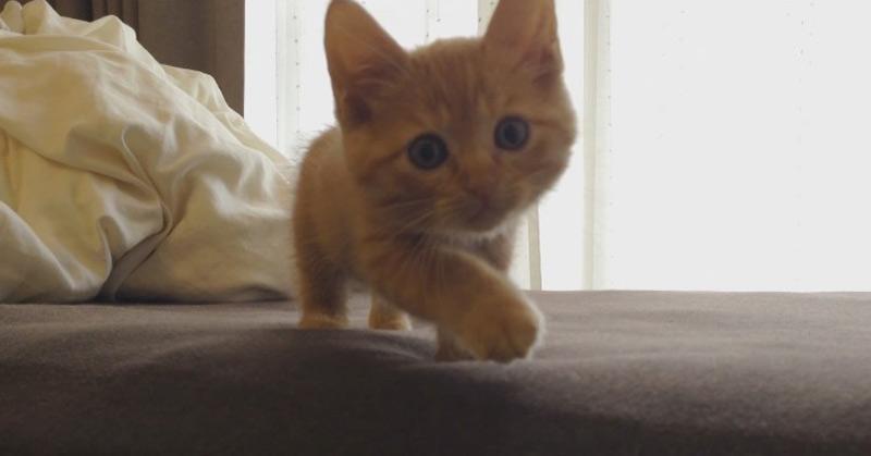 Tabby Cat Hiroshi Hiding In Bed