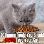 20 Human Foods You Should NEVER Feed Your Cat