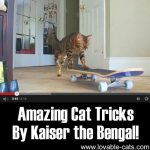 Amazing Cat Tricks By Kaiser The Bengal!
