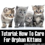 How To Care For Orphan Kittens