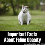 Important Facts About Feline Obesity