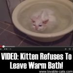 Video: Kitten Refuses To Leave Warm Bath!