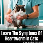 Learn The Symptoms Of Heartworm In Cats