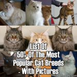 List Of 50+ Of The Most Popular Cat Breeds – With Pictures