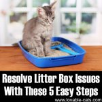 Resolve Litter Box Issues With These 5 Easy Steps