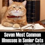 Seven Most Common Illnesses In Senior Cats