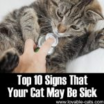 The Top 10 Signs That Your Cat May Be Sick