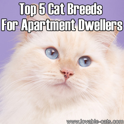 Determining What Breed Your Cat Is