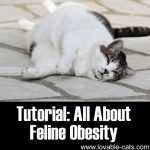 Tutorial: All About Feline Obesity