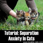 Tutorial: Separation Anxiety in Cats