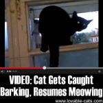 VIDEO: Cat Gets Caught Barking, Resumes Meowing