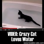 VIDEO: Crazy Cat Loves Water