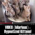VIDEO (Hilarious): Hypnotized Kittens!