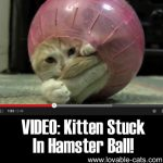 VIDEO: Kitten Stuck In Hamster Ball!