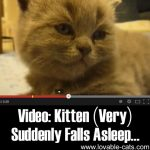 Video: Kitten (Very) Suddenly Falls Asleep