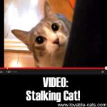VIDEO: Stalking Cat!