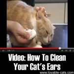 Video: How To Clean Your Cat's Ears