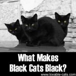 What Makes Black Cats Black?