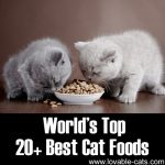 World's Top 20+ Best Cat Foods