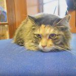 Understanding Feline Body Language