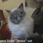 Astonishing Cat With Two Faces Is A Real Cat, Not A Hoax!