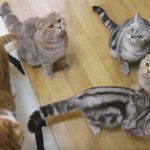 Hungry Cats Meowing For Food