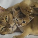 This Mother Cat's Love For Her Kittens Is Adorable